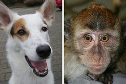 Dogs and some primates can sense the earth magnetic field with the help of molecules in their eyes.