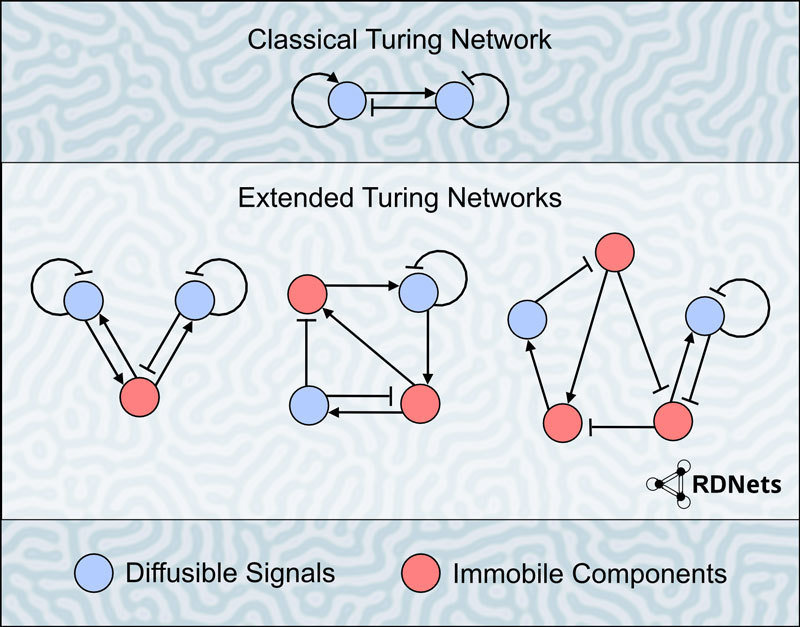 turing-network-web