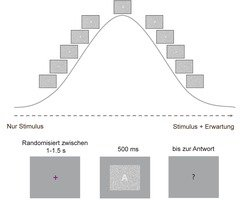 This diagram shows the experimental set-up used by Max Planck researchers to examine how the human brain processes visual information. Initially, the subjects participating in the trial had to fix a cross on a screen. Then, they were presented with an image with randomly distributed pixels (random field of noise) for a duration of 500 ms. After that, a response screen displayed a question mark and subjects could indicate by pressing a button if they were able to recognize a symbol within the random field of noise. The same was repeated with screens, in which the hidden symbol became gradually more and more recognizable. As soon as the symbol had appeared fully and was clearly recognisable, the scientists presented the same screens in reverse order, showing each symbol fading gradually.