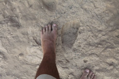 The shapes of the fossil and modern footprints are nearly indistinguishable.