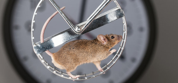 Research on mice at Max Planck Institutes