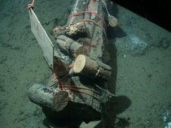 Frisch versenkter Stamm im norwegischen Nordmeer. Für jedes Experiment wurden je ein großer und mehrere kleine Stämme mit Hilfe eines Tauchroboters am