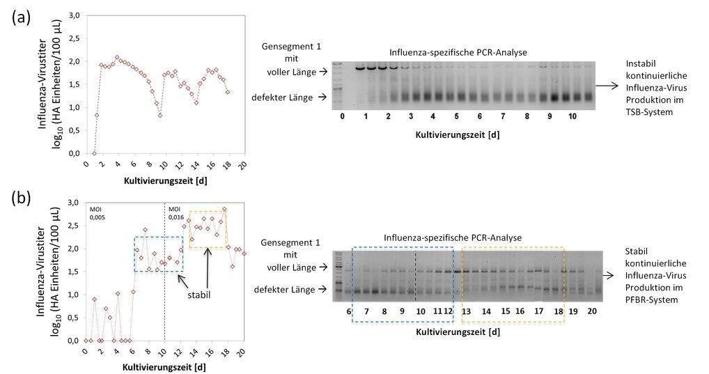 <strong>Abb. 2:</strong> Vergleich der kontinuierlichen Influenza-Virusproduktion mittels 2-Kaskaden-Rührkesselreaktor-System und einem Rohrreaktor mi