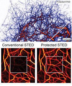 <strong><strong>Top:</strong> </strong> Protected STED microscopy provides images with unprecedented contrast and dynamic range. <strong>Below:</strong> Reduction of photobleaching achieved with Protected STED.