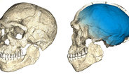 Scientists discover the oldest Homo sapiens fossils at Jebel Irhoud, Morocco.