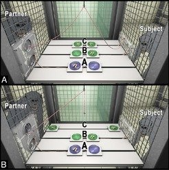 Study set-up: (A) Starting point: From the perspective of the subject, the partner can decide between option A, in which the partner alone obtains food, and option B/C, in which the partner leaves the distribution of the food up to the subject and risks not getting anything. (B) End point: The partner chose option B/C. The subject rewards this favour by choosing option C, in which both animals obtain food.