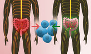 Intestinal flora from twins initiate multiple sclerosis