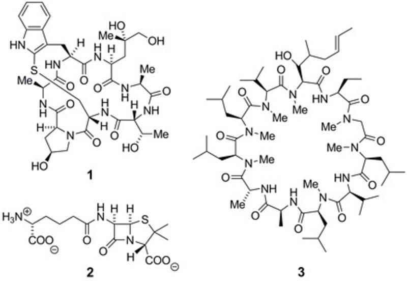 Strukturformeln von beispielhaft herausgegriffenen Peptidnaturstoffen. 1: Phalloidin; 2: Penicillin N; 3: Cyclosporin A.