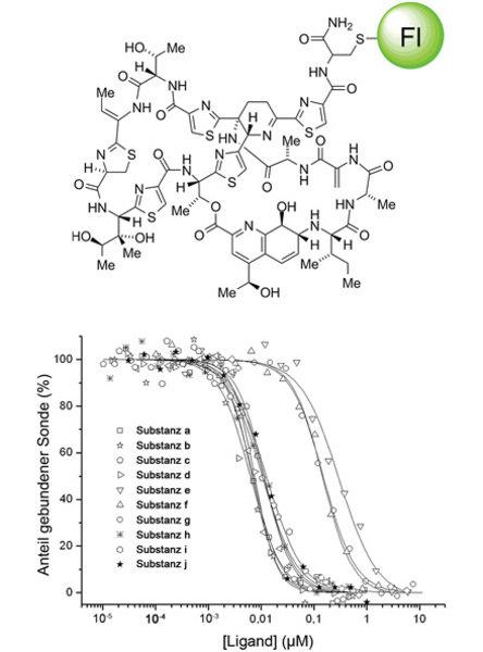 A) Struktur einer fluoreszenten Thiostrepton-Sonde (Fl: Fluorescein). B) Repräsentatives Diagramm der Quantifizierung des Bindungsverhaltens von Thios