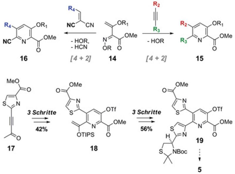 Hetero-Diels-Alder-Reaktionen von 1-Azadien 14 zu verschiedenen 3-Hydroxypyridinen 15 und 16 sowie zur Darstellung des Nosiheptidkerns 19.