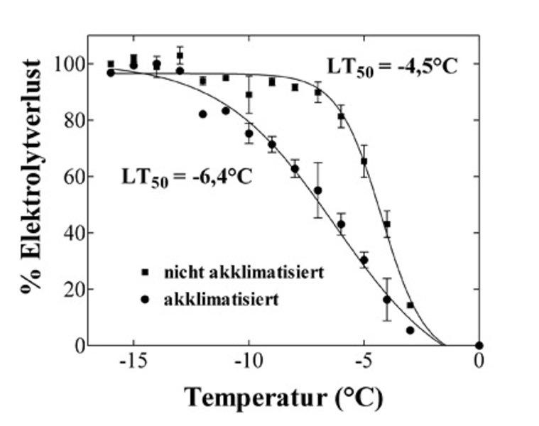 Bestimmung der Frosttoleranz von Blättern von Arabidopsis thaliana (Akzession C24). Die nicht akklimatisierten Pflanzen wurden bei Tag/Nacht-Temperatu