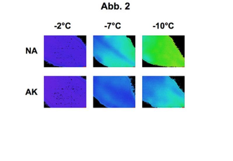 Analyse von Frostschäden an Blättern von Arabidopsis thaliana durch Chlorophyllfluoreszenz-Messungen. Die Experimente wurden wie in Abbildung 1 beschr