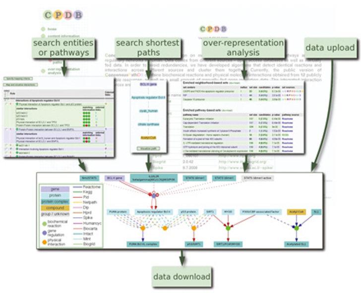 <b>ConsensusPathDB.</b> Die Abbildung zeigt die wesentlichen Funktionalitäten der Nutzerschnittstelle, beispielsweise die Suche nach spezifischen Komp