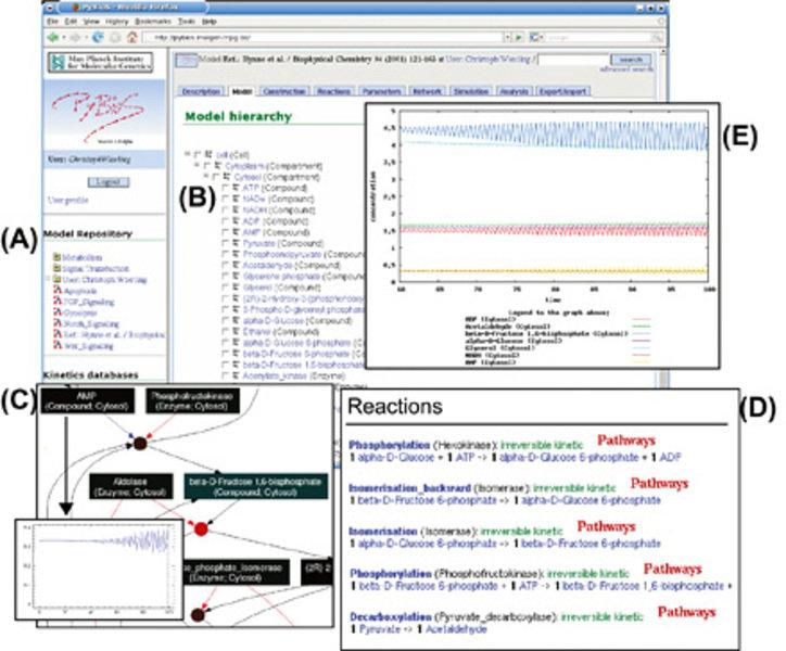 Die Web-basierte Benutzerschnittstelle des <b>Modellierungssystems PyBioS</b> beinhaltet eine Sammlung verschiedener Modelle (<b>A</b>). Die hierarchi