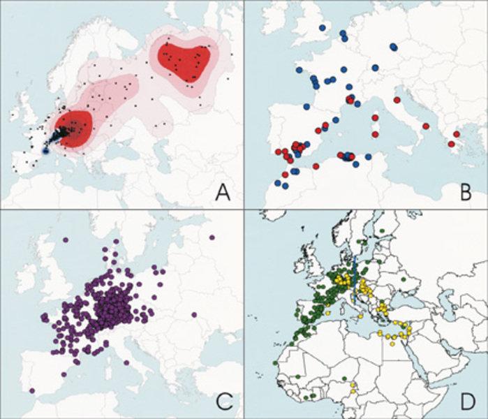 Beispiele für Fundanalysen beringter Vögel. A) Funde (Punkte) markierter Tauchenten (v.a. Reiherente, Tafelente), die in Süddeutschland beringt wurden