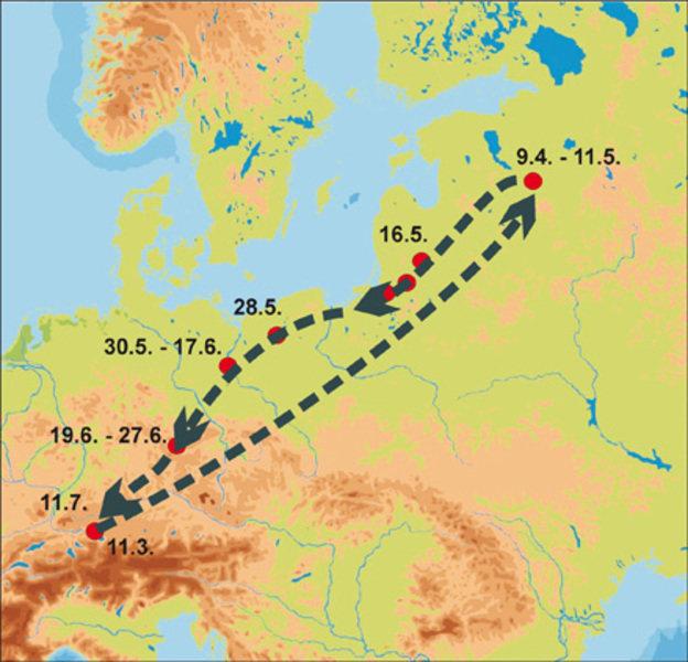 Wanderung eines Stockenten-Erpels, der vom Bodensee nach Russland und zurück verfolgt werden konnte. Der Vogel wurde mit einem Peilsender ausgestattet
