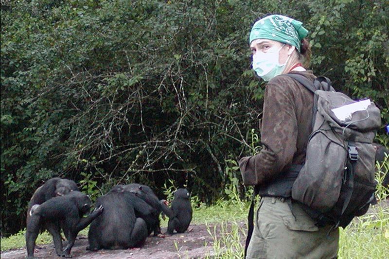 Great Apes endangered by human viruses
