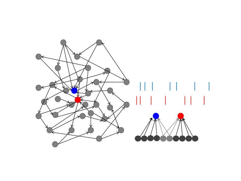Schematische Darstellung eines neuronalen Netzwerks und der neuronalen Aktivität zweier Neurone.  Links: Zwei Neurone (rot, blau) erhalten von verschi