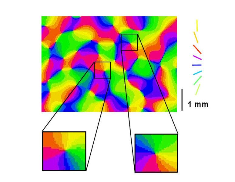 Karte der Orientierungspräferenz in der Sehrinde eines Frettchens. Zwei Pinwheels (Windrädchen) sind vergrößert. Falschfarbendarstellung der Orientier