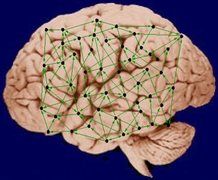 Max-Planck-Forscher modellieren Hirnstrukturen als neuronale Netzwerke. Ihre neuesten Befunde zeigen, dass die komplizierte Verschaltungs-Struktur die