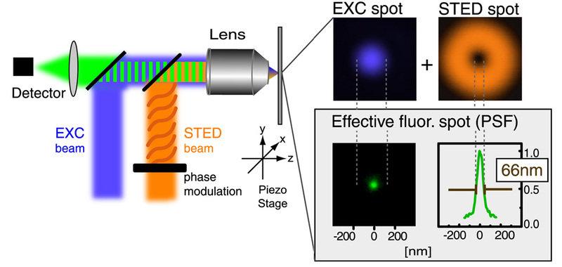 Die STED-Mikroskopie. Der blaue Lichtstrahl (EXC beam) wird mithilfe eines geeigneten Spiegels in das Objektiv (Lens) gelenkt, wo er aufgrund der Beug