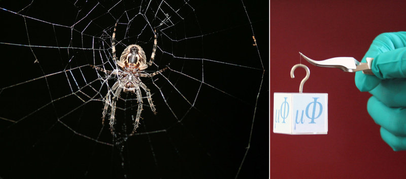 Endurance test for spider silk: in many ways, spider silk - here the picture of a garden cross spider in its web- is stronger than a metal wire of the same thickness. After researchers at the Max Planck Institute for Microstructure Physics infiltrated spider silk with metal ions, a double-strand of silk can support the weight of a cube of 27.5 grams, three times more than an untreated strand.