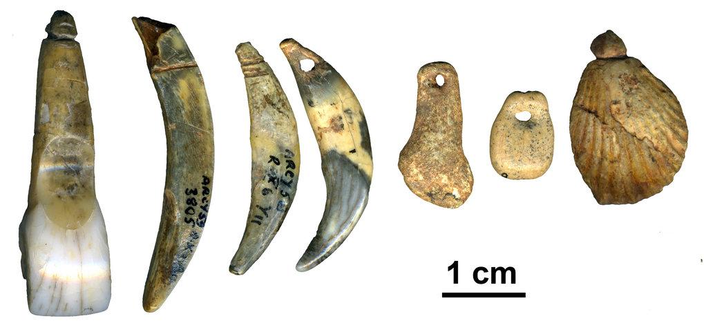 """Von Neandertalern während der archäologischen Kultur """"<em>Châtelperronien</em>"""" hergestellter Körperschmuck aus der <em>Grotte du Renne</em>. (Arcy-su"""