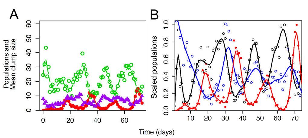 Abb. 3: A) Öko-evolutionäre Dynamiken in Rädertier-Algen-Systemen (Räuber-Beute-Systemen), wenn das System mit innerartlicher Variation gestartet wird