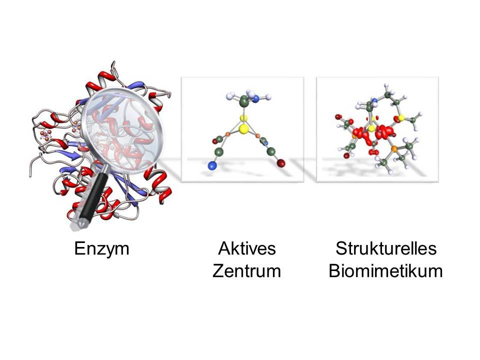 <strong>Abb. 1:</strong> Darstellung des Enzyms der FeFe-Hydrogenase (links), eine Vergößerung von Details des aktiven Zentrum (Mitte) mit einem in de