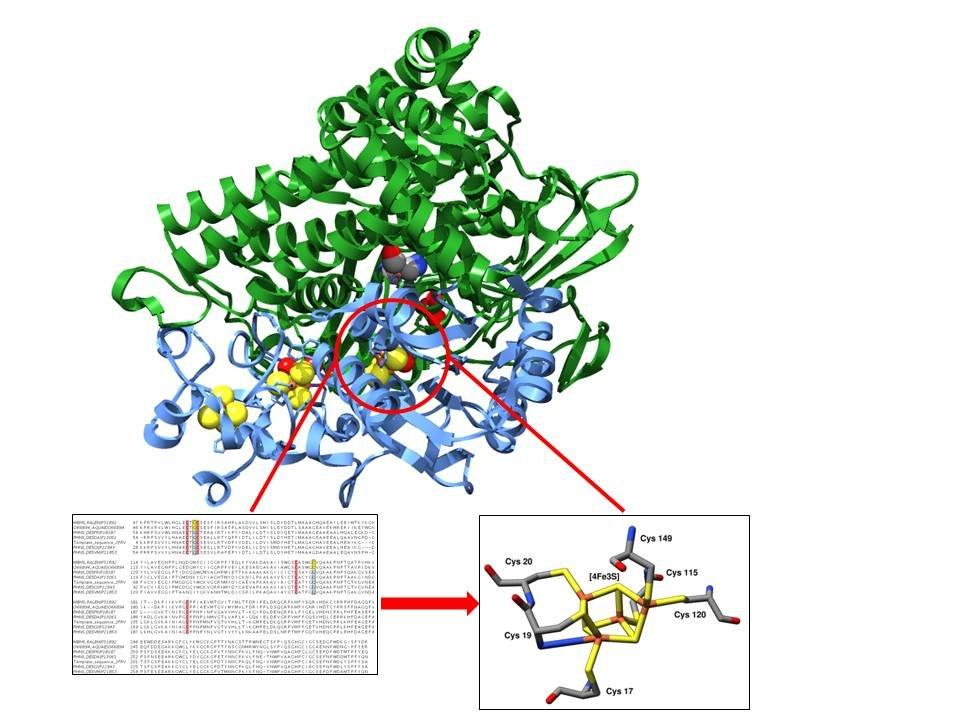 <strong>Abb. 2:</strong> Sauerstofftolerante Hydrogenase aus der Klasse der [NiFe]-Hydrogenase. Die Toleranz gegenüber Luftsauerstoff wird nicht, wie