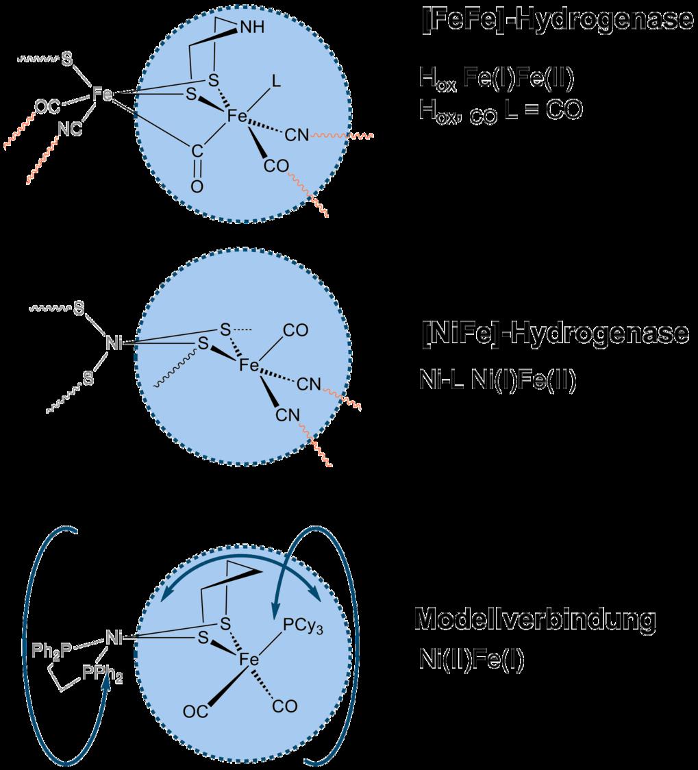<strong>Abb. 3:</strong> Darstellung der Gemeinsamkeiten der aktiven Zentren der [FeFe]-, [NiFe]-Hydrogenasen und von Modellverbindungen. Verankerunge