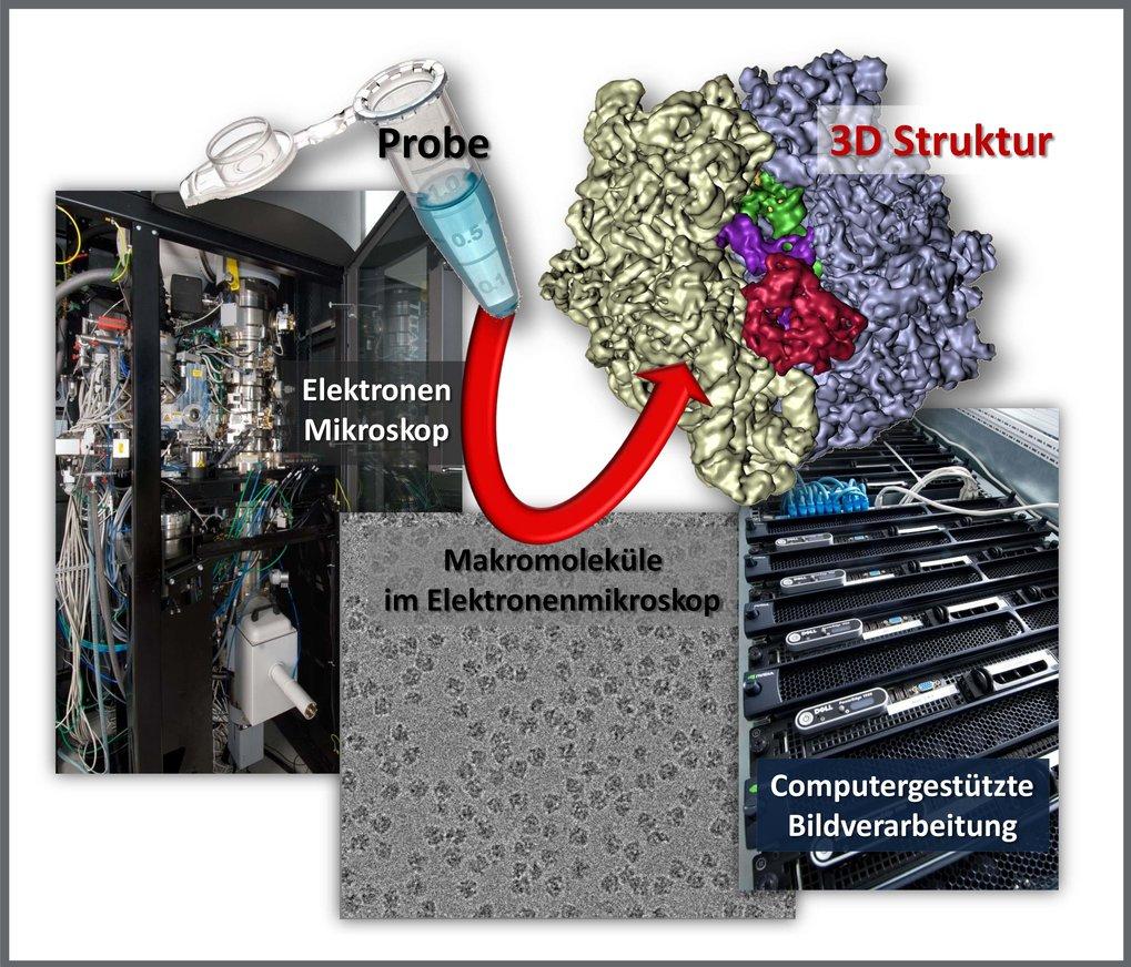<p><strong>Abb. 1:</strong> <strong>Schematische Darstellung der Kryo-Elektronenmikroskopie</strong></p> <p>Makromoleküle werden mit biochemischen Met