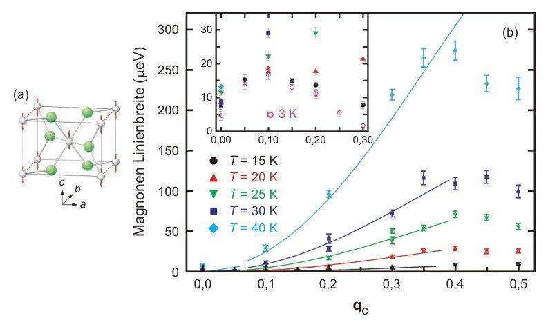 Abb. 2: (a) Antiferromagnetische Ordnung in MnF2. Die Pfeile zeigen die Magnetmomente der Mn2+-Ionen an. Die grünen Kugeln sind F–-Ionen. (b) Linienbr