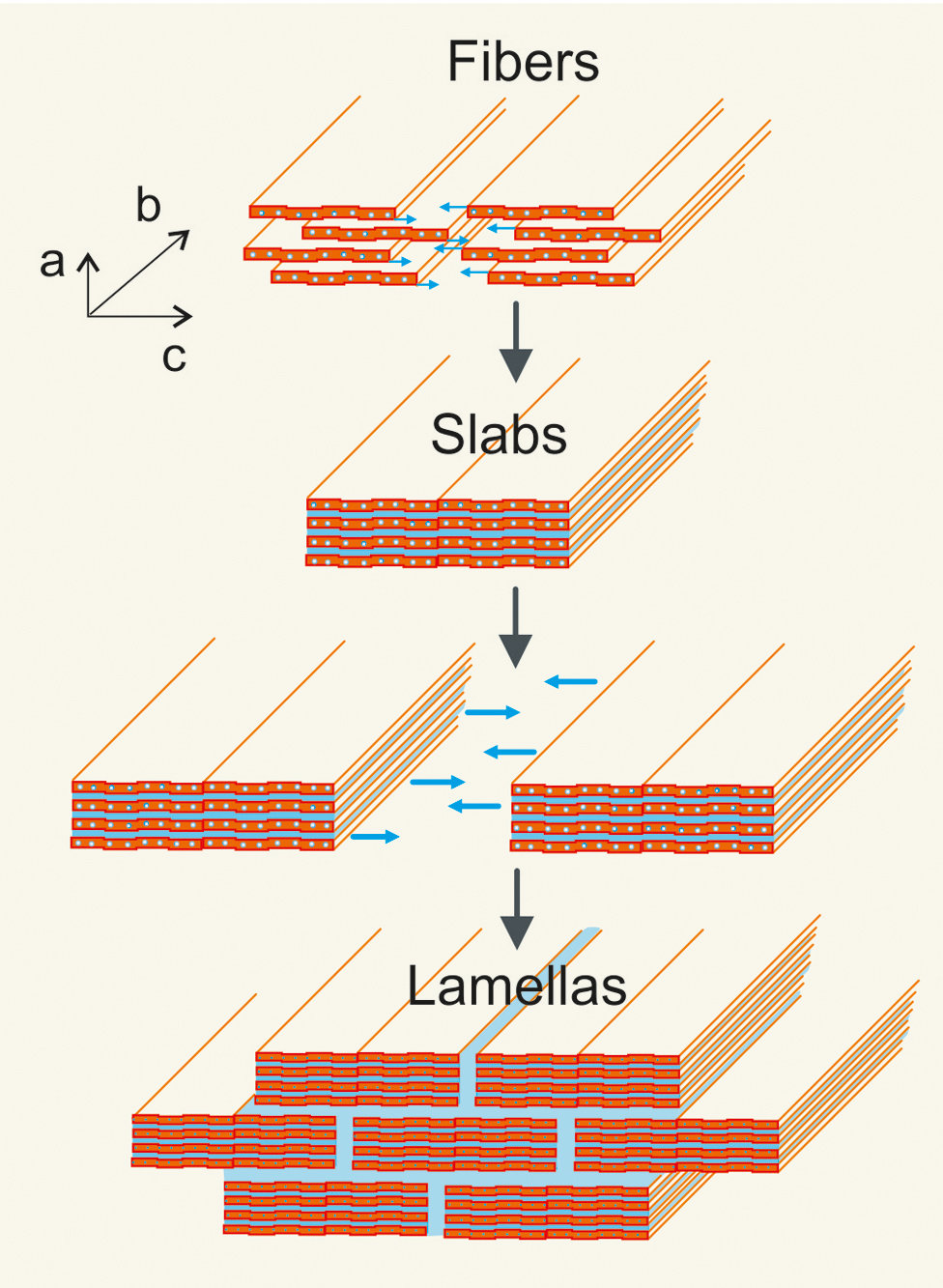 <p>The nanostructure is what makes the material tough and elastic: The nanofibres layer themselves in slabs which are stacked in staggered formations