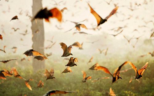 An der Vogelwarte Radolfzell des Max-Planck-Instituts für Ornithologie verfolgen Martin Wikelski und seine Team verschiedenste Tierarten mithilfe von