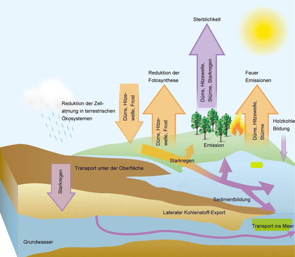 Die vielfältigen Folgen von Wetterextremen: Dürren, Hitzewellen, Stürme, Starkregen und extremer Frost greifen auf verschiedenen Wegen