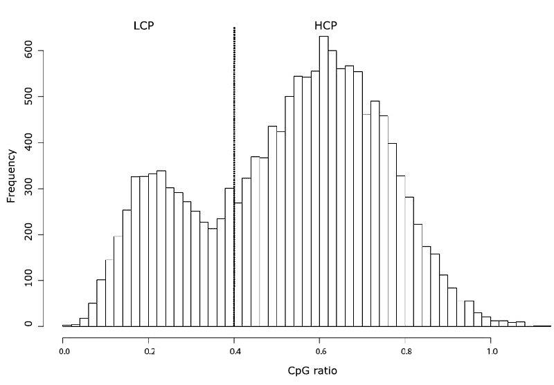 Abb. 1: Histogramm der CpG-Dichte in menschlichen Promotoren. LCP: Low CpG Promotoren, HCP: High CpG Promotoren.