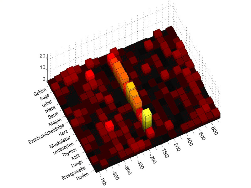 Abb. 2: Ausprägung des TATA-Box Motivs in humanen Promotoren mit niedrigem CpG-Gehalt, aufgeteilt nach demjenigen Gewebe, in dem das jeweilige Gen exp