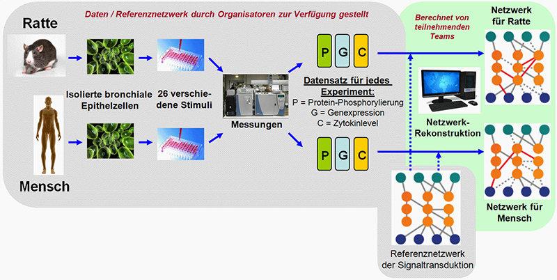 """Abb. 3: Übersicht über die 4. Sub-Challenge (""""Species Specific Network Inference"""") der sbv IMPROVER """"Species Translation challenge"""" (siehe auch [7])."""