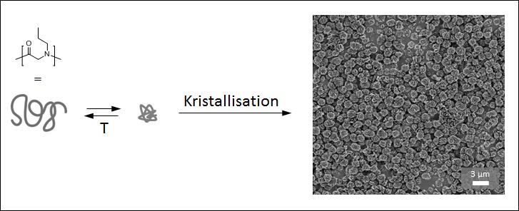 Abb. 2: Temperatur-induziertes Schalten und Kristallisation von Poly(N-propylglycin) in wässriger Lösung.
