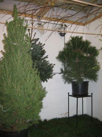 <strong>Abb. 2:</strong> Im Experiment können Grünpflanzen in nicht-stimulierendem Kurztag (kürzeste Tage im Jahr) frühe Brutaktiv