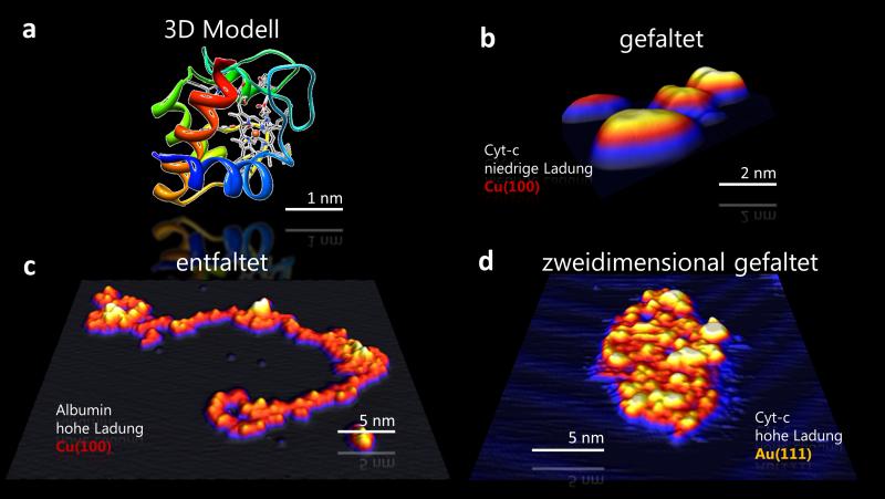 <p><strong>Abb. 3:</strong> Steuerung der Proteinkonformation durch Ionenstrahldeposition auf Metalloberflächen mit STM abgebildet. (a)Drei