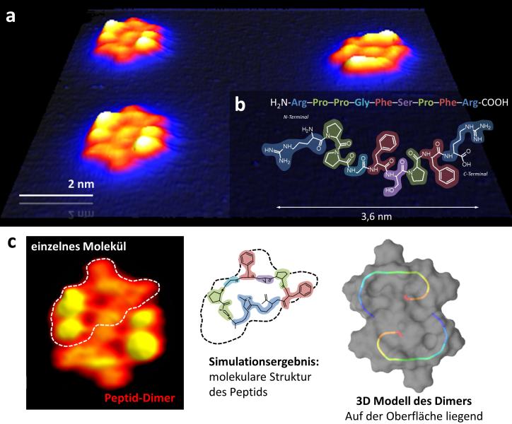 <p><strong>Abb. 4:</strong> Faltung eines Peptides (Bradykinin) auf der Kupferoberfläche. (a) Peptid-Strukturen aus zwei Molekülen auf der O