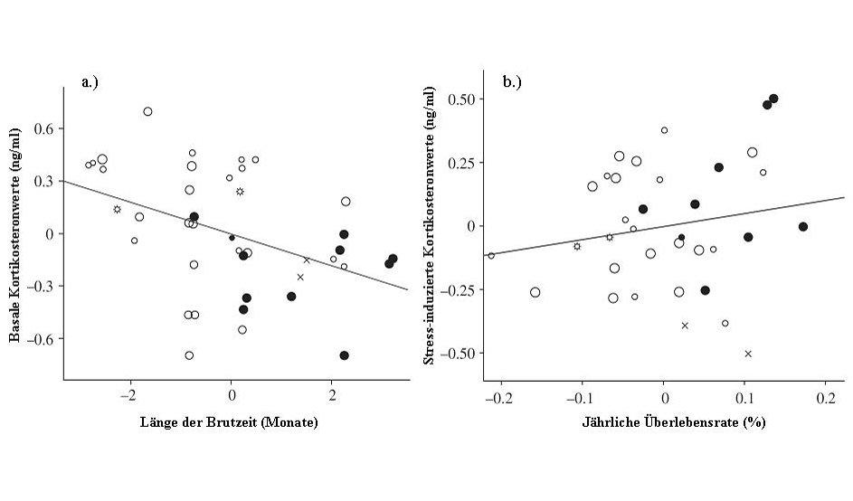 <strong>Abb. 2: </strong>Zusammenhang zwischen Kortikosteronkonzentration (Mediane pro Art, von Männchen in der Brutzeit) und dem Lebensstil von