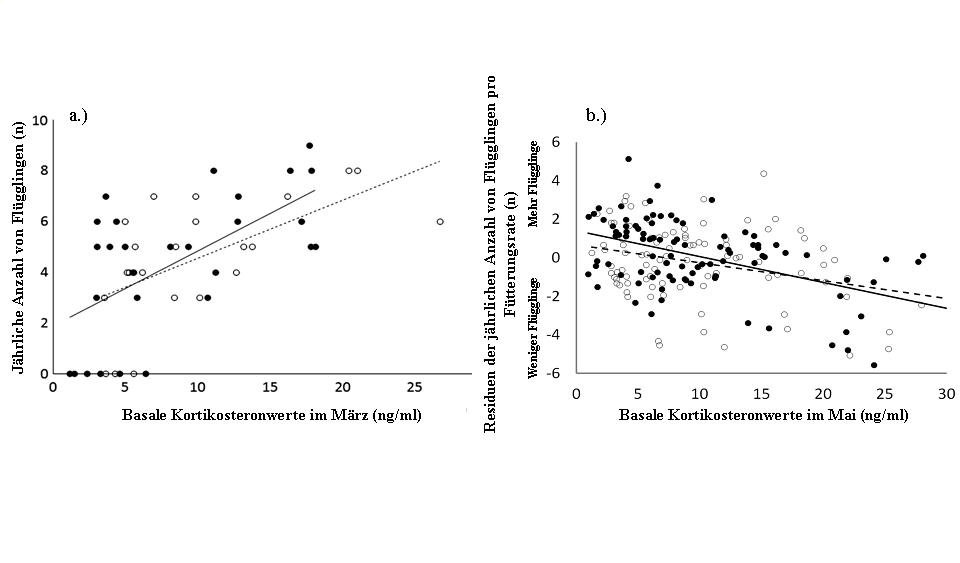<p><strong>Abb. 4</strong>.: Zusammenhang zwischen Kortikosteron-Basalkonzentrationen (ng/ml) und Fortpflanzungserfolg (Anzahl der ausgeflogenen Junge