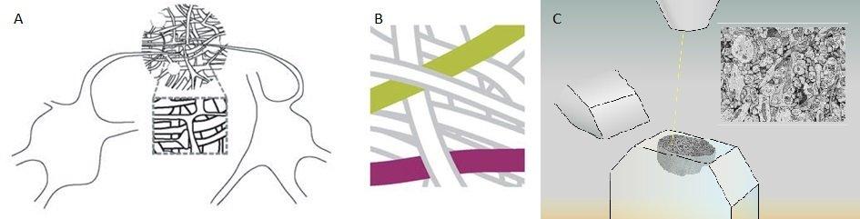 <strong>Abb. 1: </strong>Herausforderungen der dichten Rekonstruktion von Nervenzellnetzwerken <br />(A) Die Analyse synaptischer Schaltkreise erforde