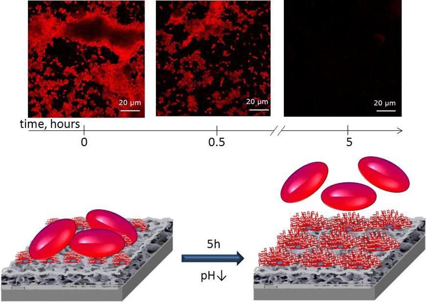 Abb. 4: Unten: Schematische Darstellung eines Rückkopplungsmechanismus, bei dem die Zelle einen Metaboliten produziert, durch den sie wegen der pH-Änd
