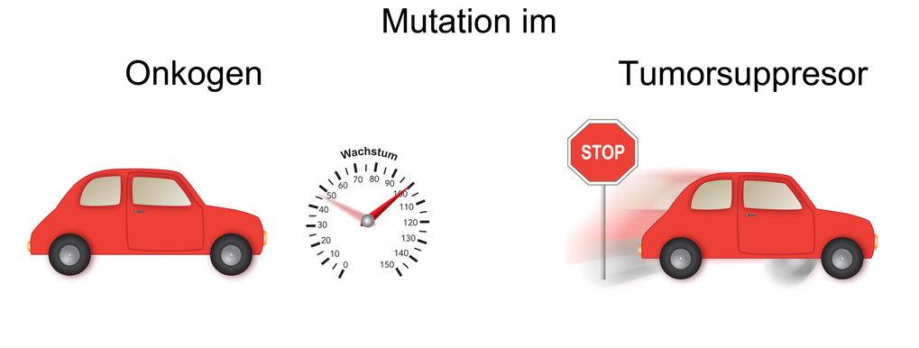 Abb. 1: Die Rolle von Mutationen in Onkogenen und TumorsuppressorgenenMutationen in Onkogenen arbeiten wie das Gaspedal eines Autos, sie erhöhen die G
