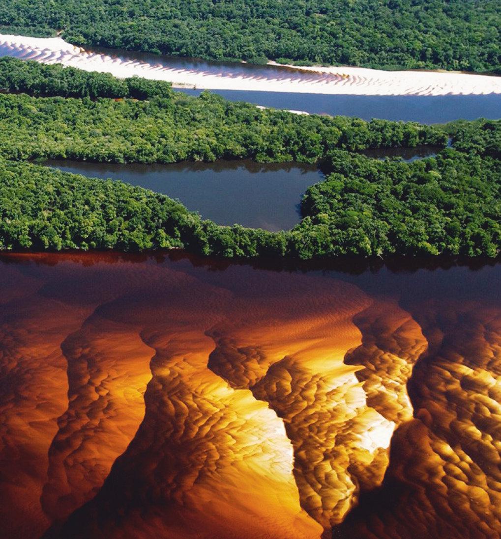 Tropischer Regenwald wie etwa im Amazonasgebiet reagiert immer empfindlicher auf Temperaturveränderungen: Wegen der Erderwärmung schwankt die Kohlenst