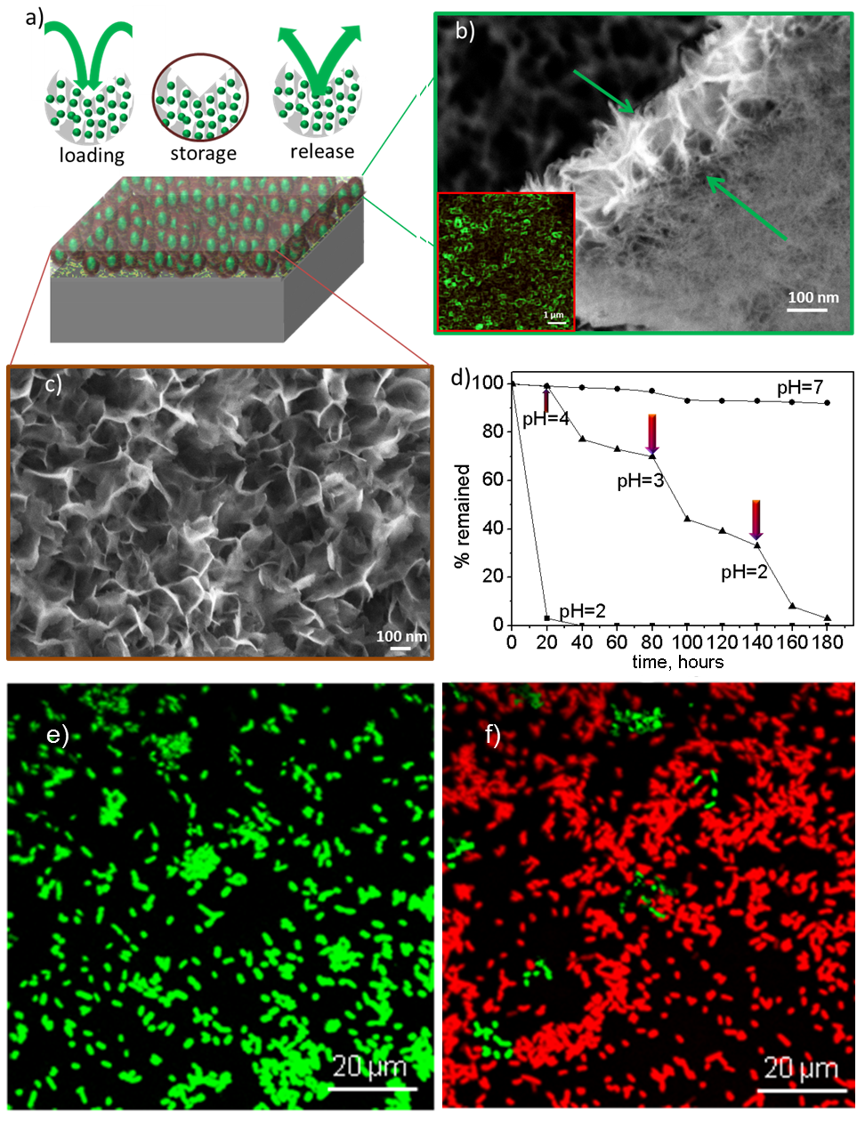 Abb. 2: Oben: Schematische Darstellung des Einbaus des fluoreszierenden Wirkstoffs Doxorubizin (links) und Nachweis des Einbaus in die Oberfläche (grü